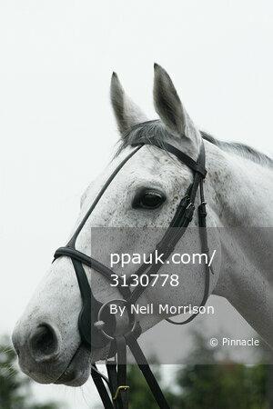 Nicholls Stables 180209
