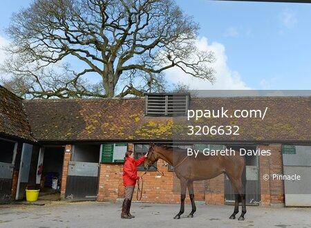 Paul Nicholls' Stables Visit 240215