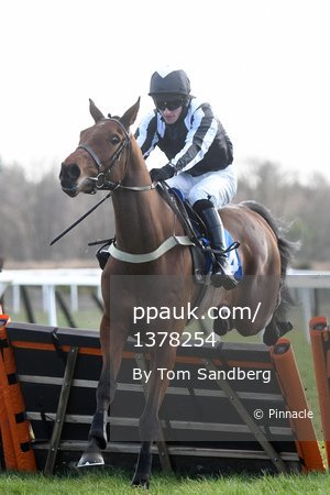 Exeter Races, Exeter, UK - 24 Feb 2017