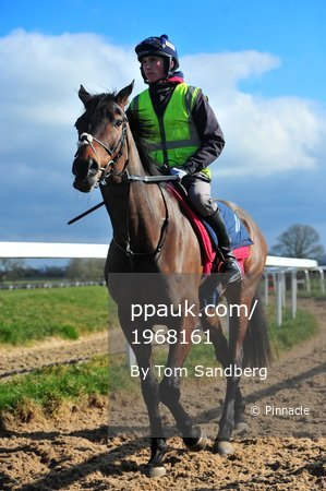 Paul Nicholls Stables Day, Ditcheat, UK - 26 Feb 2018