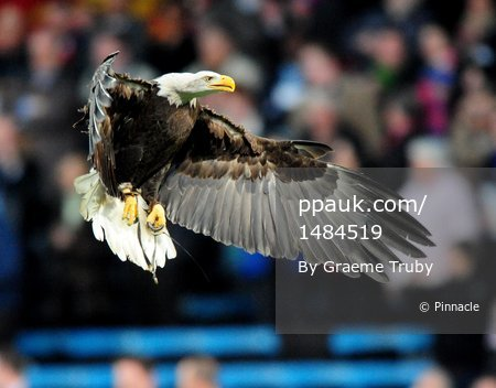 Crystal Palace v West Brom 260410