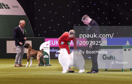 Crufts 2019 - Best in Show