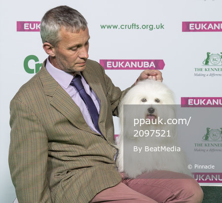 Crufts 2019 - Best of Breed / Toy