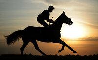 Wincanton Races 231011