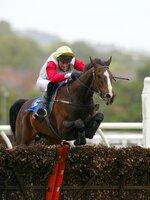 Newton Abbot Horse Racing