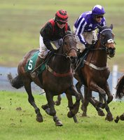 Buckfastleigh Point-To-Point, Buckfastleigh, UK - 15 Mar 2020