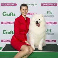 Crufts 2019 - Best of Breed