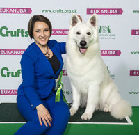 Crufts 2019 - Best of Breed / Pastoral