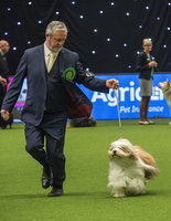 Crufts 2019 - Best of Breed / Utility