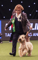 Crufts 2019 - Best of Breed / Terrier