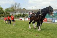 Cornish Pirates  Horse Pull